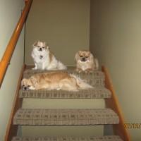 Tibbie Trio