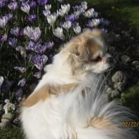 Sophie in Springtime